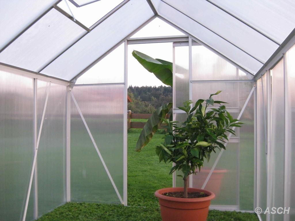 7 05m alu aluminium gew chshaus glashaus tomatenhaus 6mm. Black Bedroom Furniture Sets. Home Design Ideas